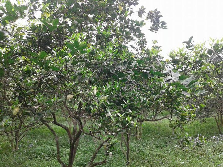 Anh Sơn với công tác ứng dụng TBKH&CN trong  lĩnh vực nông nghiệp trong 5 năm thực hiện Nghị quyết 06-NQ/TU